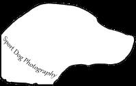 dog, photo, photography, portrait, photographer, canine, hunt, test, trial