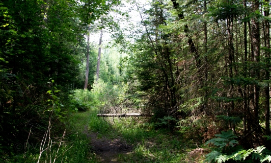 AuSable, River, Trail, Fly, Fishing, Michigan